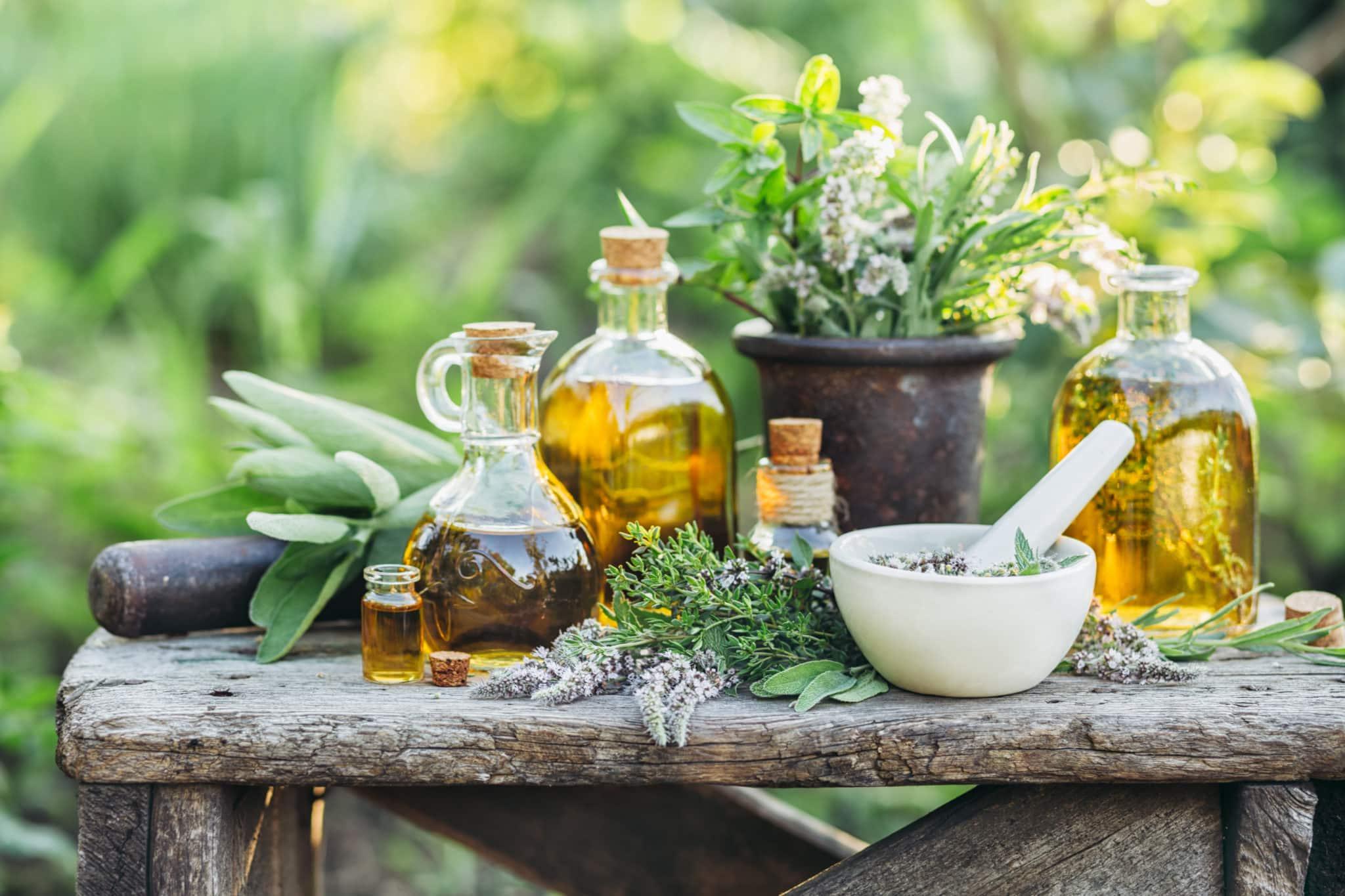 Plant Medicine Made Easy
