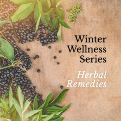 elderberry uses workshop elderberry remedies